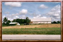pinar-farm7.jpg